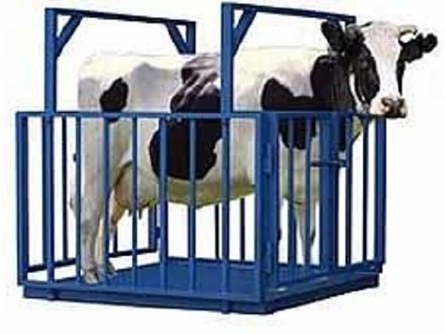 Весы для животных ВСП4-1000АЖСО-1520